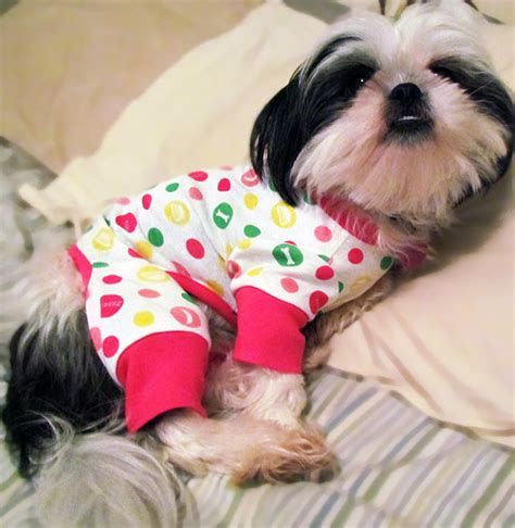 clothes for shih tzu crates shih tzu store breeds picture