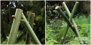 How To Tie Bamboo Trellis How To Build A Bamboo Trellis That Lasts Attainable