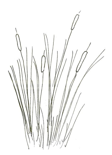 cattails coloring pages free coloring pages of wetlands plants