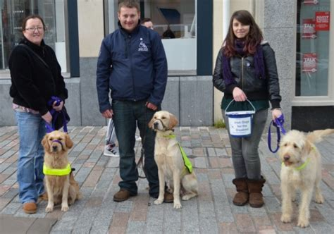 dogs for the disabled 10 ways to support dogs for the disabled dogs for the disabled