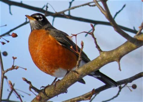 bird watching for beginners boston mamas