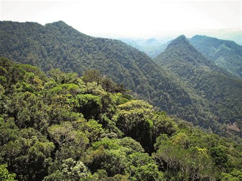 Forest Mba Us News by Conserving Madagascar S Forest Of Birdlife