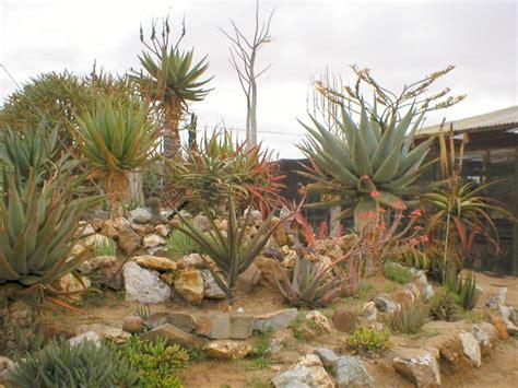 succulent garden designs small rock garden design ideas