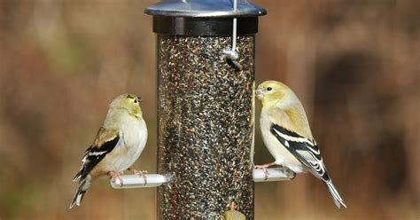 wild birds unlimited how to attract winter finches