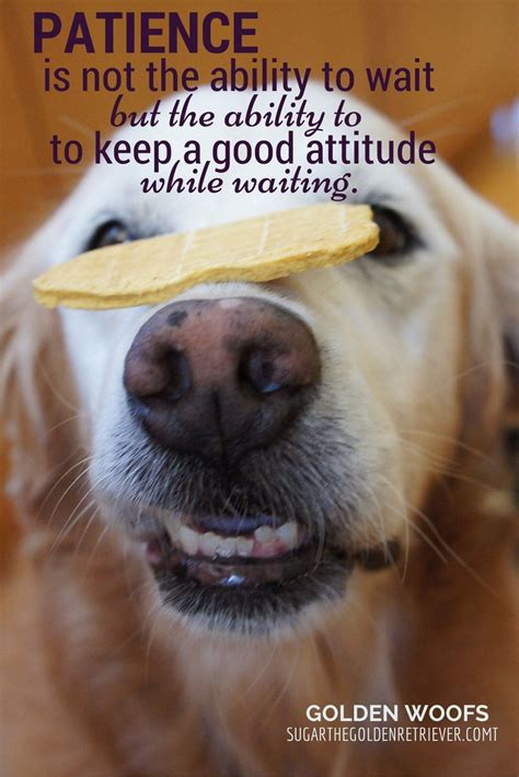 patience puppies 17 best images about inspiring quotes on dr seuss and simple
