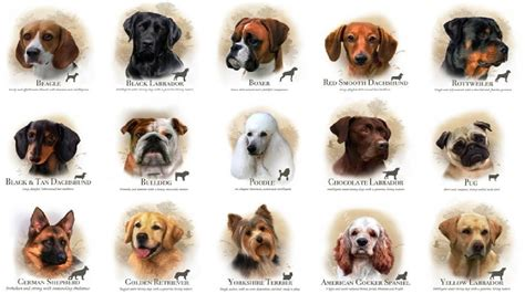 puppies and their breeds what breed are you viral fancy