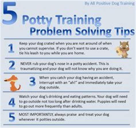 how to potty train a house dog labrador retriever lab information all about the labrador retriever dog training breeders