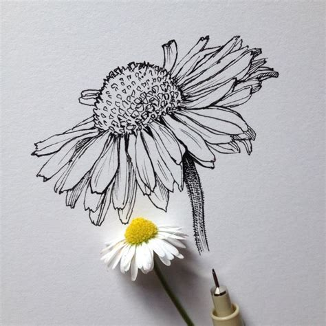 drawn flower pinterest pencil and in color drawn flower