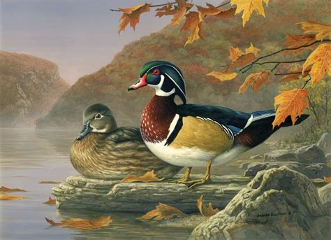 watercolor wood duck by manicmagician on deviantart pin by hi look online on hautman brothers pinterest