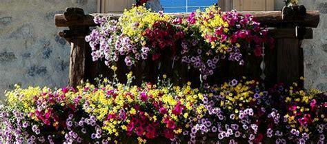 balconi fioriti in inverno iniziative a larino comincia la sfida quot balconi fioriti