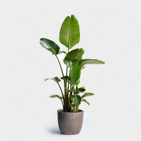 buy indoor plants    stores curbed
