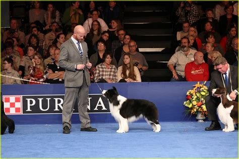 purina show who won best in show at the purina national show 2016 photo 3815151