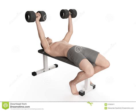 exercise bench exercises bench press stock illustration image 57003311