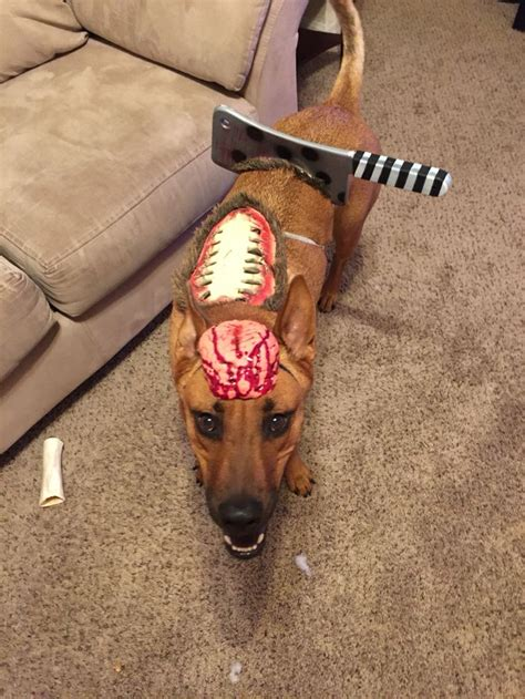 diy zombie dog costume pet halloween costumes cute dog