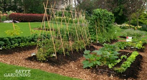 Vegetable Garden Planting 6 Vegetable Gardening Tips Every New Food Gardener Needs