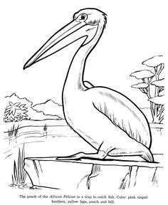 Bird Amazing Rubber St pelican coloring page twisty noodle birds to embroider