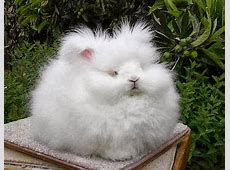 World's Fluffiest Bunny   Incredible Things Fluffiest Kittens In The World
