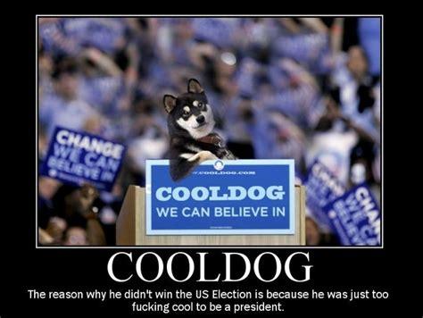 Cool Dog Meme - cool dog meme