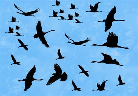 birds brushes free photoshop brushes at brusheezy