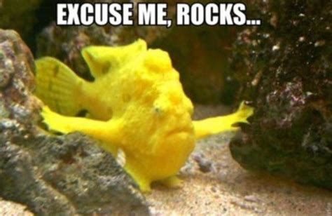Funny Fish Memes - gallery funny looking fish