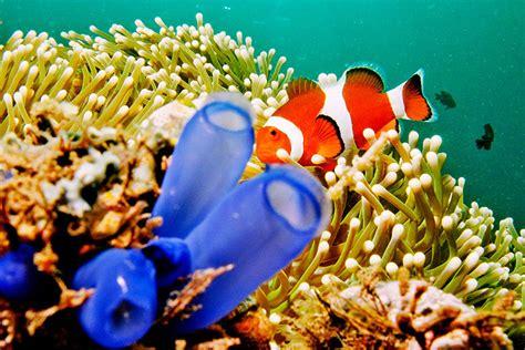 laut indonesia punya ibu kota dunia sumberdaya laut part 1 erni