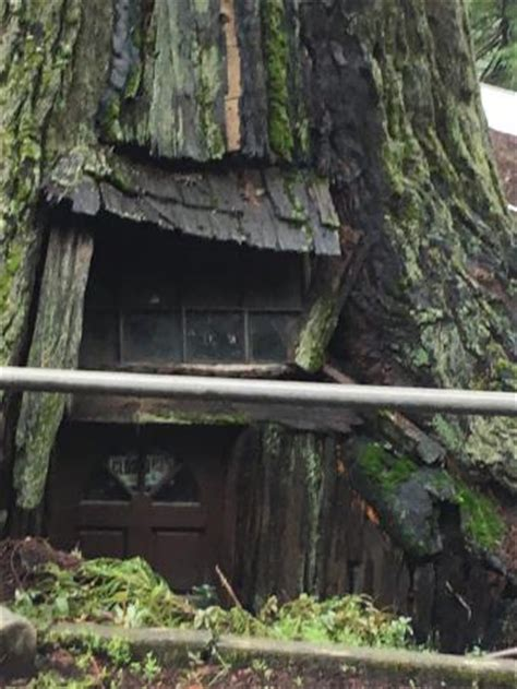 famous tree houses me in front of redwood treehouse recently picture of