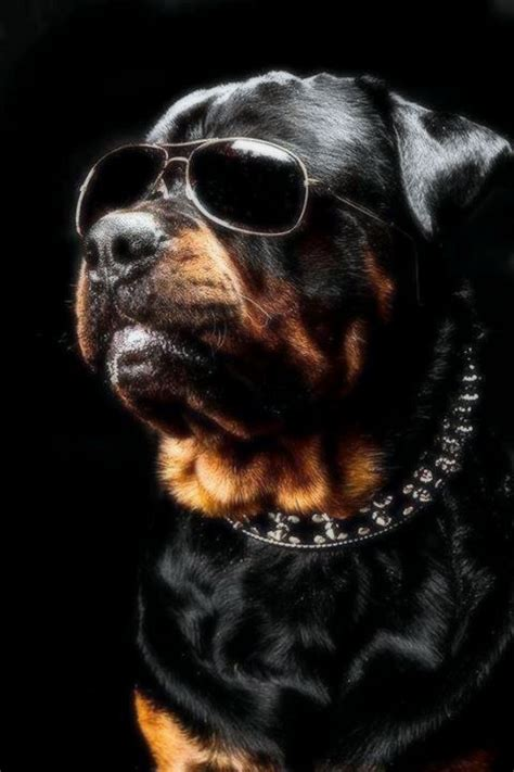 cool rottweiler names rottweiler new terminator these are a few of my favorite things