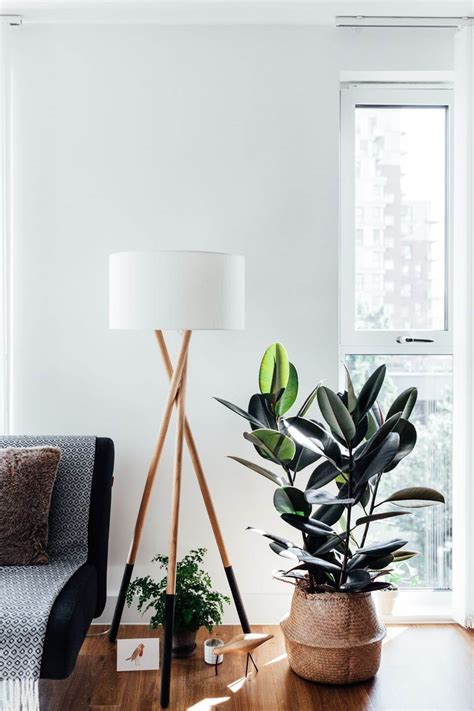 fresh beautiful indoor plant ideas for eco friendly 23201 indoor house plants the ultimate guide nonagon style