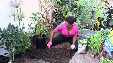 The Chefs Garden how to grow anasazi sweet corn the chef s garden