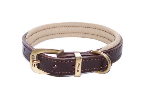 best collar for puppies collars for staffies best staffy collars
