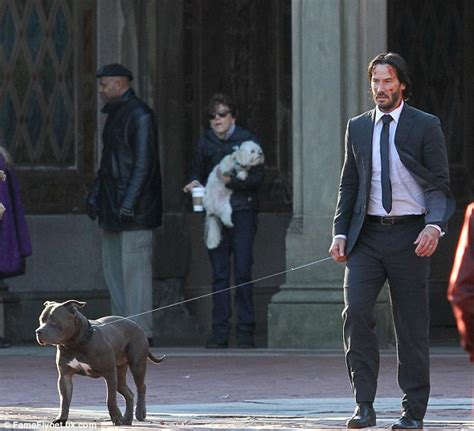 wick puppy keanu reeves is scraped up in suit as he goes walks pit bull on the set of wick 2