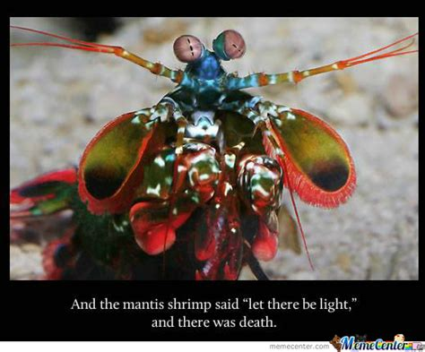 Mantis Meme - why you don t mess with a mantis shrimp by kang kersoon