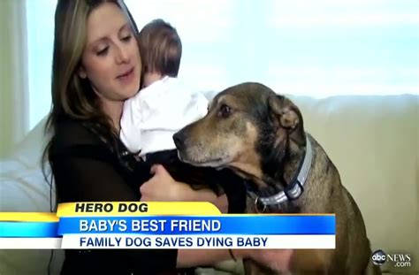 saved by dogs may 2012 baby s life is saved by a dog the family rescued