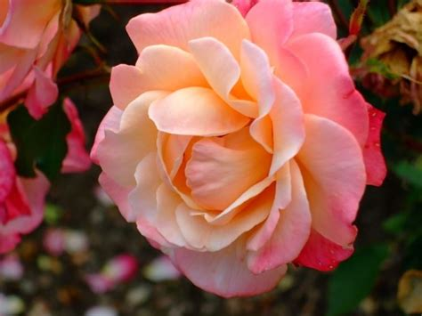 Bella Piante Da Giardino Con Fiori #2: inglesi_NG2.jpg