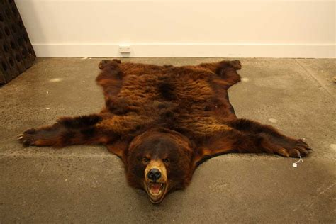 Bearskin Rugs by A Brown Skin Rug With Full Antiques Modern