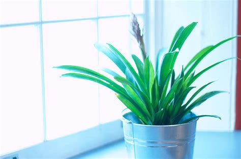 interior house plants add house plants to your home makeover plan