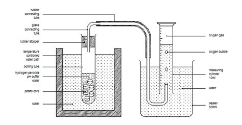 design an enzyme experiment josh keys biologymatters enzymes
