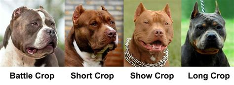 cropping dogs ears ear cropping essential tips for puppy owners