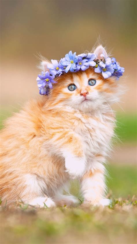 wallpaper cute kitten adorable hairband hd animals