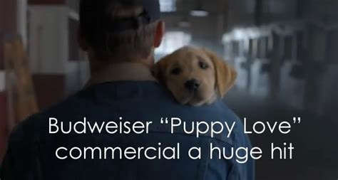 puppy commercial budweiser bowl xlviii commercial quot puppy quot best