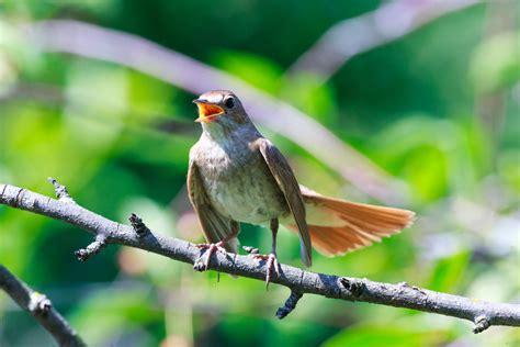 libro drle doiseau birdify le shazam pour oiseaux les m 233 sanges