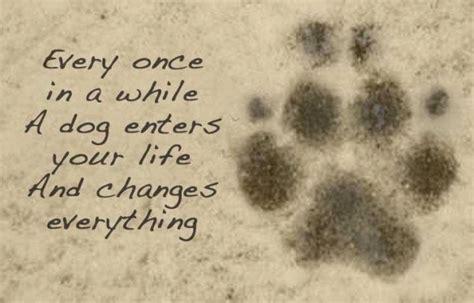 losing  dog quotes quotesgram