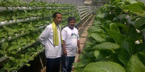 membuat green house hidroponik jokowi sebut petani green house sebulan untung rp 2 4 juta