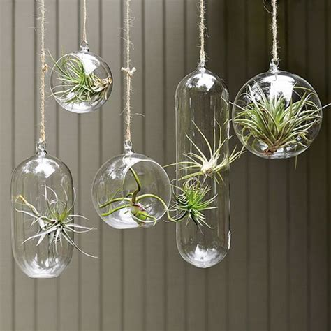 Decorative Gift Ideas by Unique Gift Air Plants Home Decoration Inspiration Ideas And Gifts