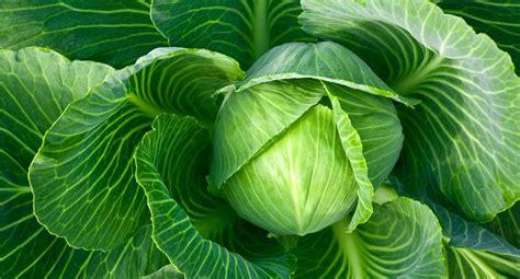vegetables for skin 13 vegetables for glowing skin that your cook kept secret