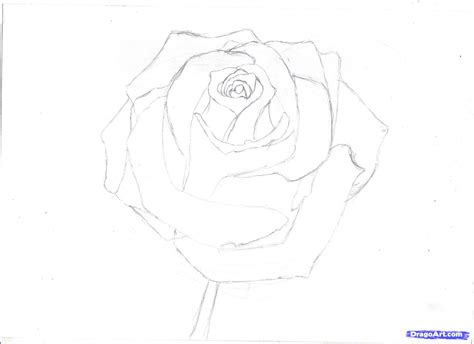 Drawing In Pencil Step By Step by Roses Drawings In Pencil Step By Step Great Drawing