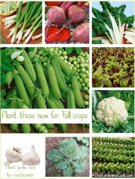 what to plant in vegetable garden now fall gardens what vegetables to plant now the
