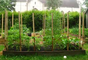 what is a trellis trying out a new idea for tomato trellises regular