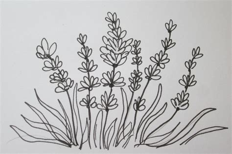 easy way to draw a the easy way to draw a lavender flower sumgun