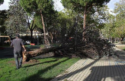 giardini pubblici firenze albero sradicato dal maltempo a firenze chiusi i giardini